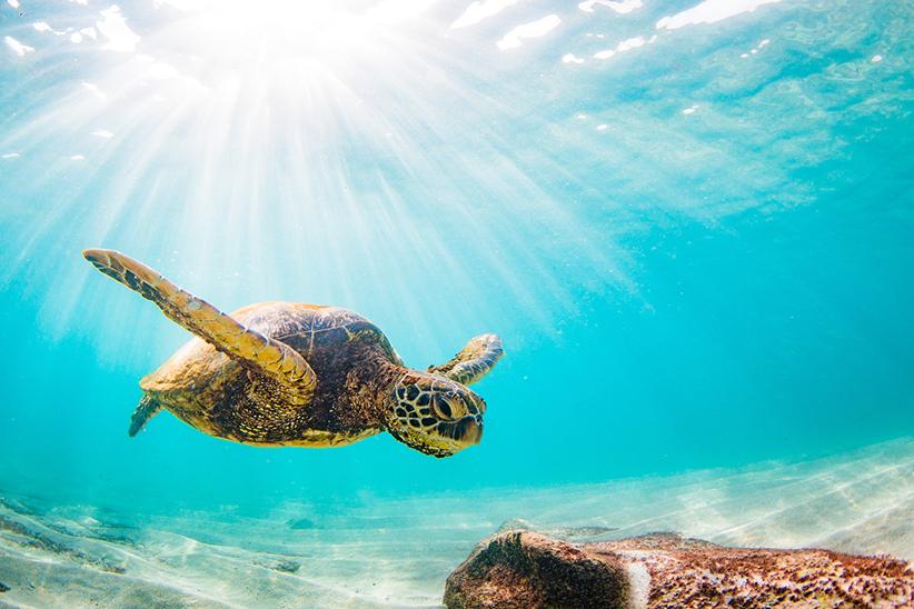 Hawaii Huna Retreat Big Island - Schildkröten